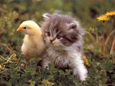 Chick with hairy pussy