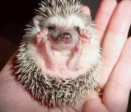 Spiky Baby