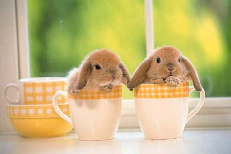 Bunnies In Cups!