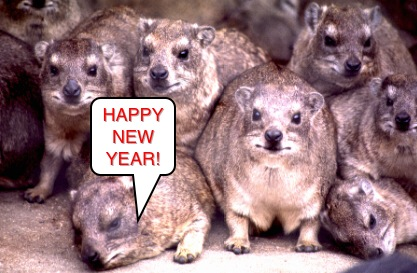New Year Hyrax